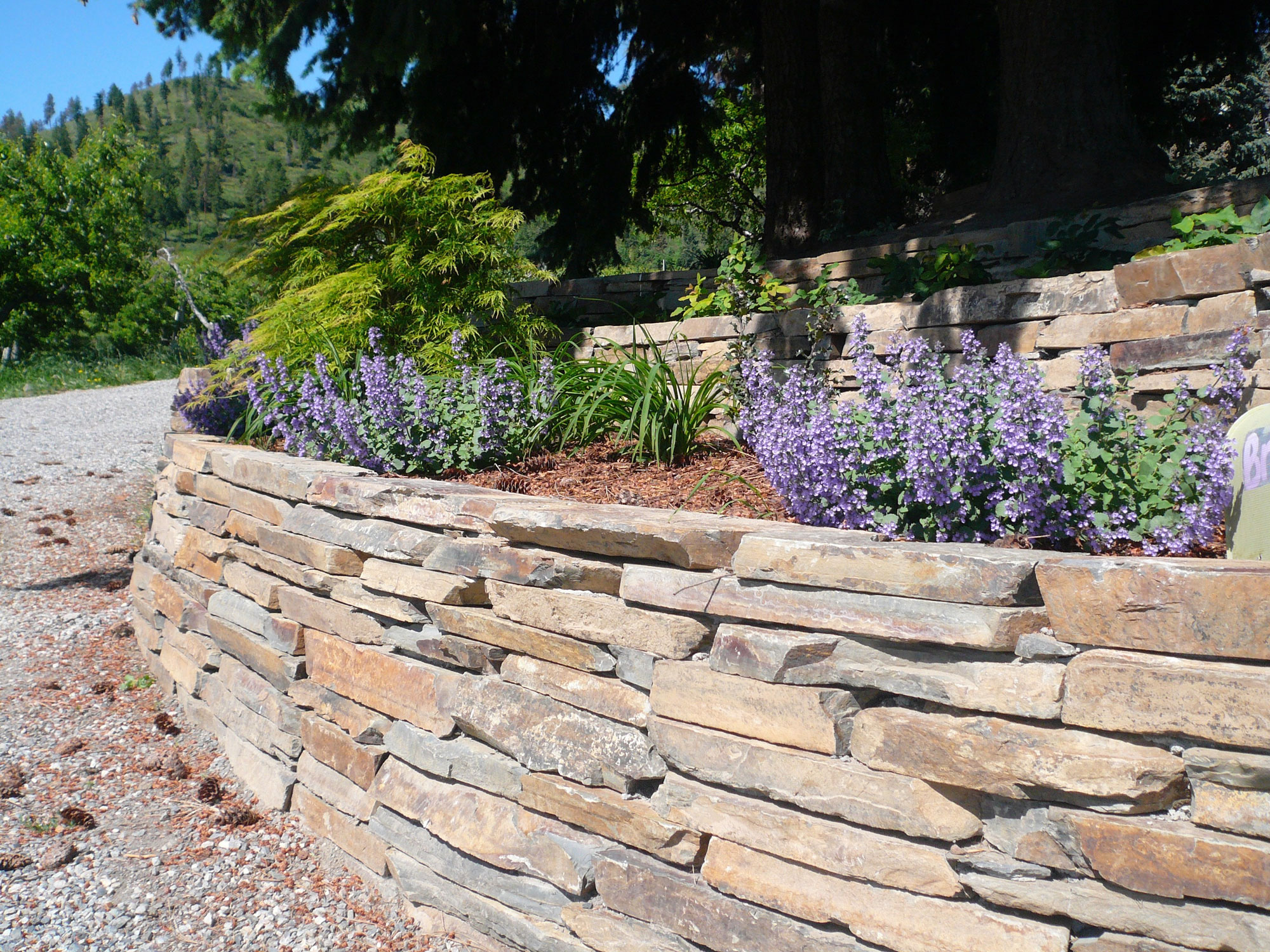 rock wall landscaping metal rock walls deeproots landscape nursery custom residential and commercial
